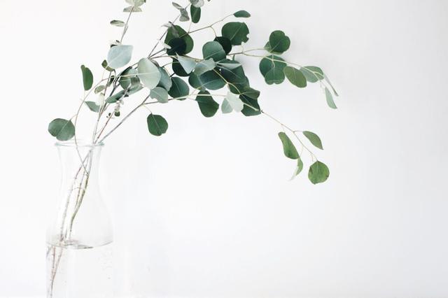 画像: 観葉植物で緑のインテリアをお部屋に。初心者でも育てやすい種類はどれ? | くらしマグネット