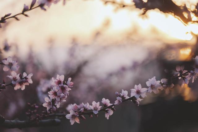 画像: 山梨果実菓子 和乃果 | WANOCA