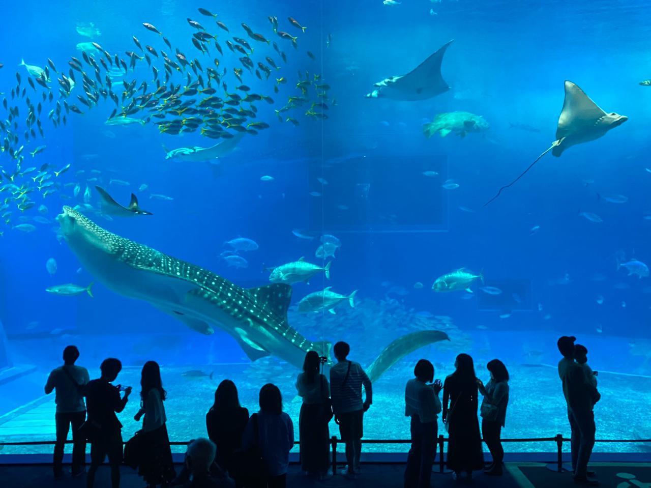 画像: 巨大な水槽やイルカショーなど見どころ満載の美ら海水族館