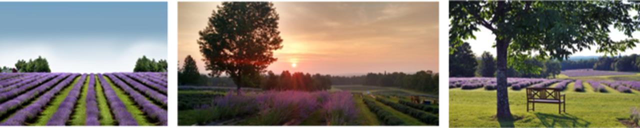 画像3: カナダ生まれの天然ラベンダーコスメブランド「BLEU LAVANDE」より、大豆由来の植物性ワックスを100%使用した「ラベンダー ソイキャンドル」が新発売!