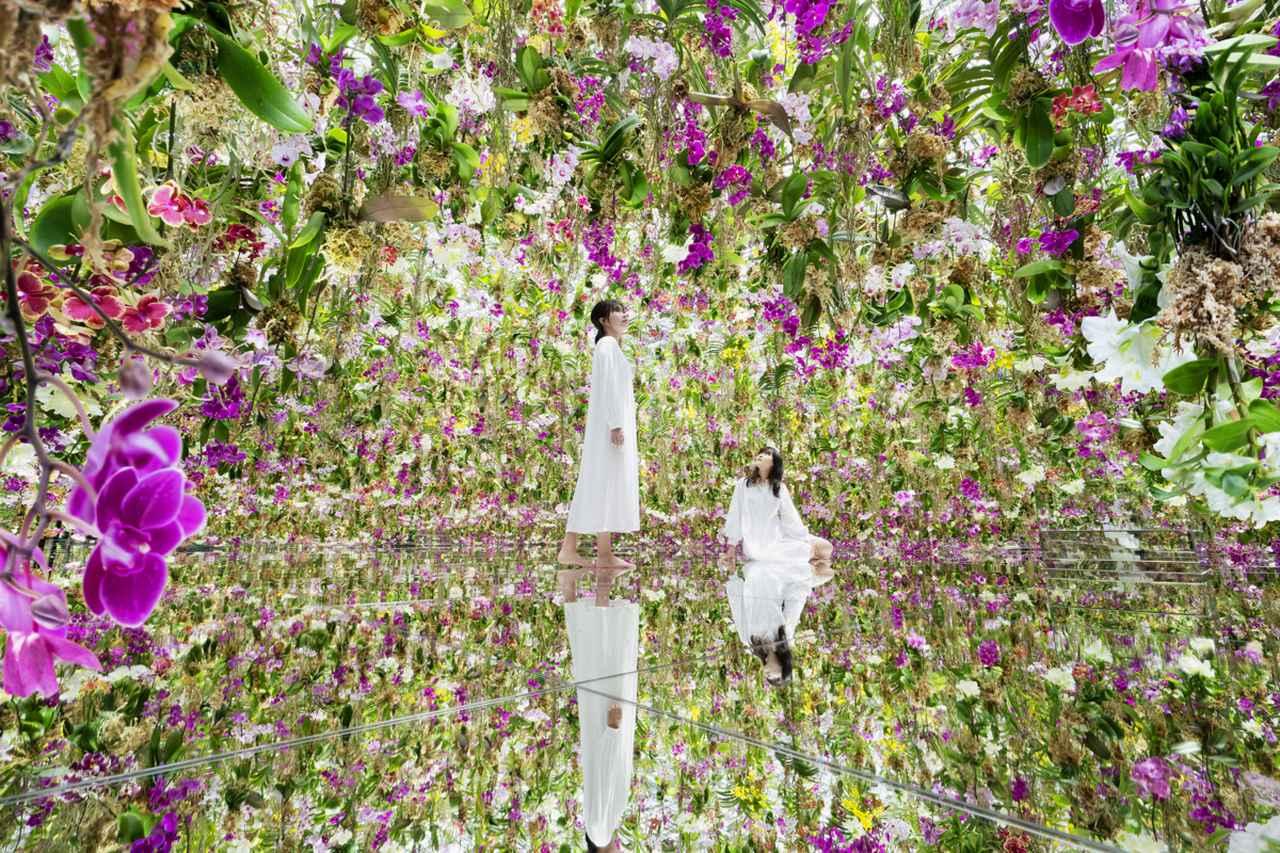 画像: やはり圧巻!「水に入るミュージアムと花と一体化する庭園」
