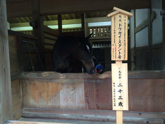 画像4: 香川の有名パワースポット! 金刀比羅宮