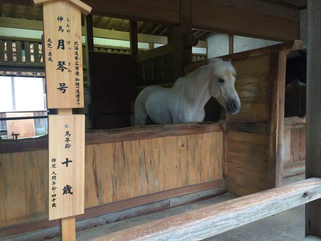 画像3: 香川の有名パワースポット! 金刀比羅宮