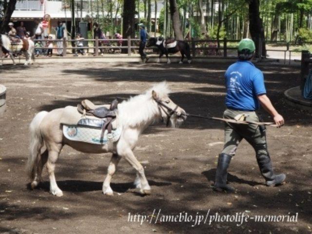 画像: 無料でポニーの体験乗馬☆