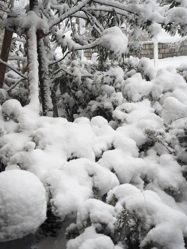 画像: 【大雪警報】やっぱり...こうなるよね☆