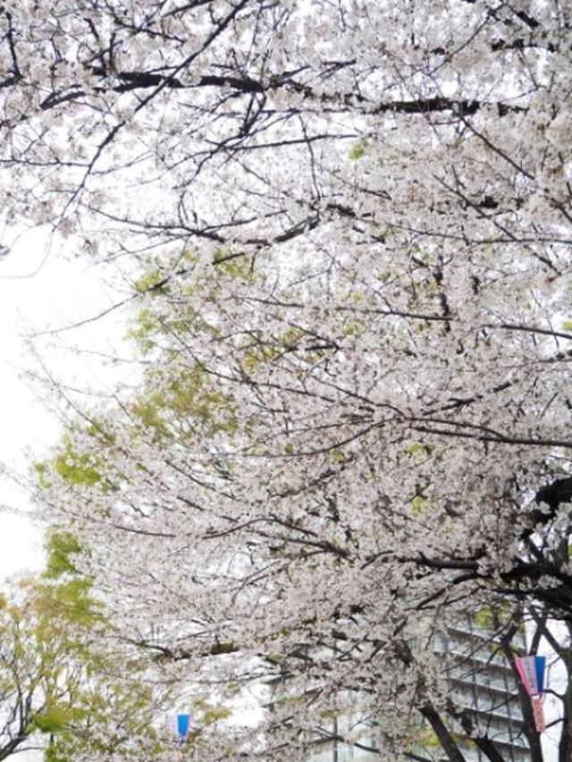 画像: 【和菓子】お花見の帰りに立ち寄った栄太楼でさくら餅やいちご大福を☆