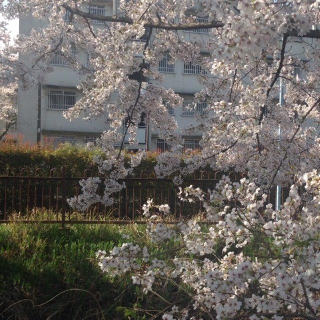 画像: プチお花見♡はじめてのお散歩