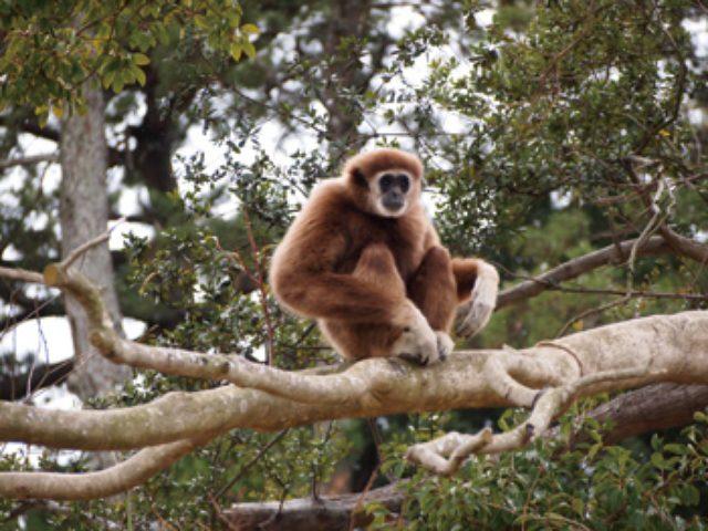 画像: この春、一部オープンしたときわ動物園。〈アジアの森林ゾーン〉では生息環境展示でサルたちの自然な行動を目にすることができる