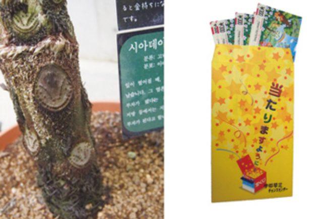 画像: 『緑と花と彫刻の博物館 ときわミュージアム』の温室にあるヒカゲヘゴ。小判型の模様を触った人が宝くじに当選したという 高額当選者が出ている宇部琴芝チャンスセンターで宝くじを購入!
