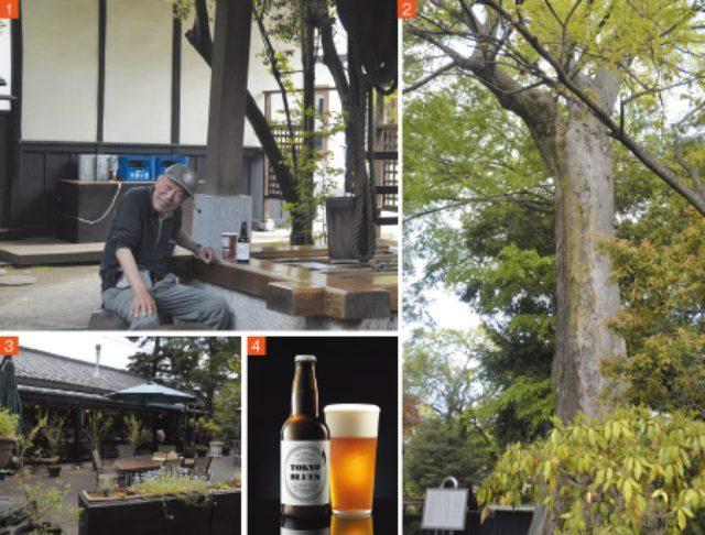 画像: 1.今では使用していない井戸を利用して、売店で購入したお酒を飲むスペースに。「毎日のように来てここで飲んでるよ(笑)」と近所に住む男性。『TOKYO BLUES』も大のお気に入り 2.石川酒造のご神木とされている樹齢700年のケヤキの巨木 3.敷地内にあるイタリアン レストラン『福生のビール小屋』 4.この春、新発売された『TOKYO BLUES』330ml466円(税別)