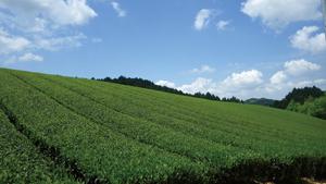 画像: 質の高い農産物を利用した商品の開発とブランド化