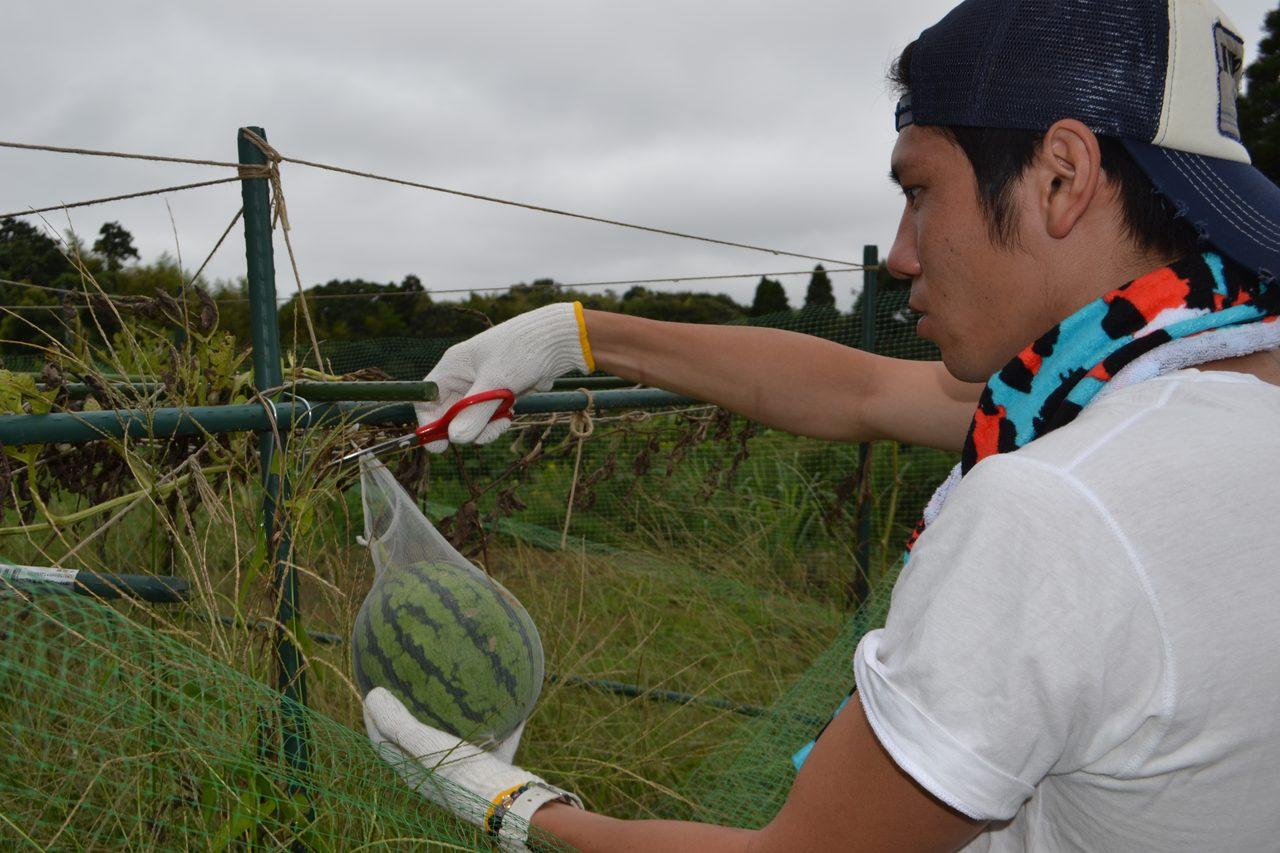 画像1: Farming Garden in 生命の森リゾート イベントリポート