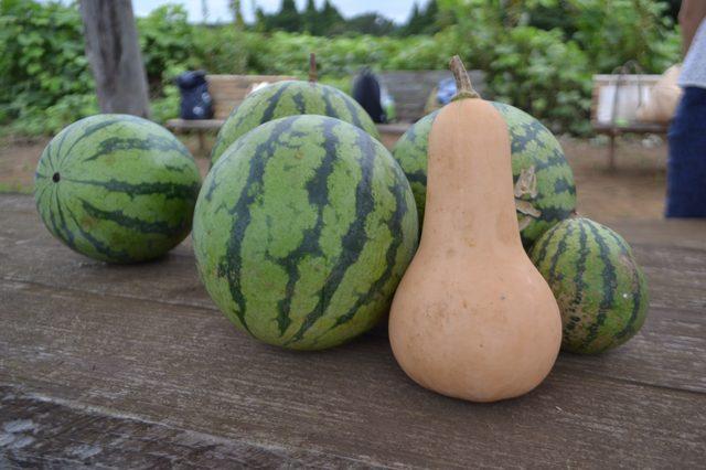 画像2: 「食」で日本を元気に~Farming Garden in 生命の森リゾート~vol,1