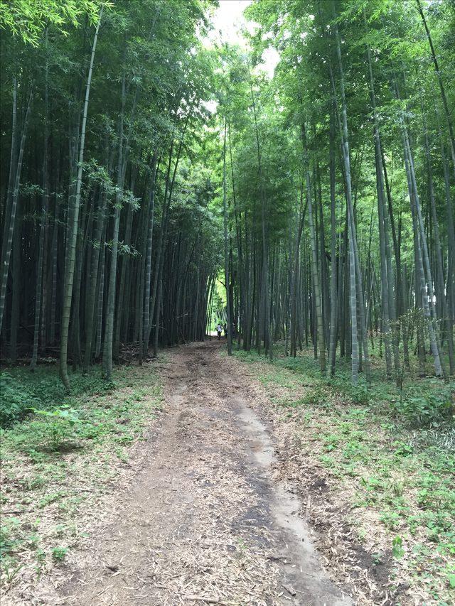 画像: 畑で一汗かいた後はお昼~ 畑から移動 竹藪を通り