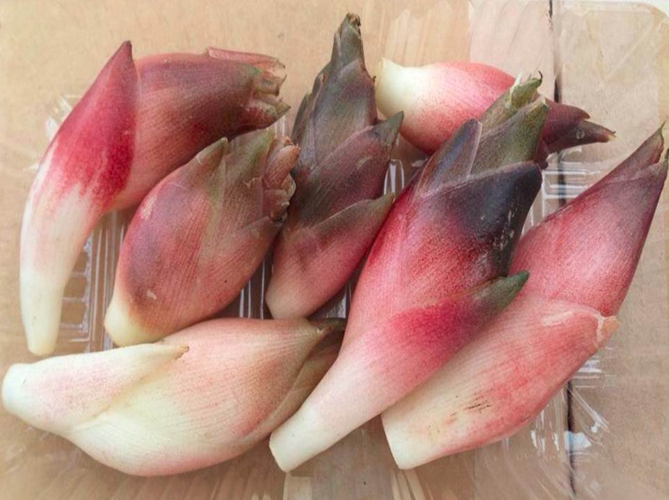 画像: 早稲田みょうが 赤くて大ぶりなのが特徴