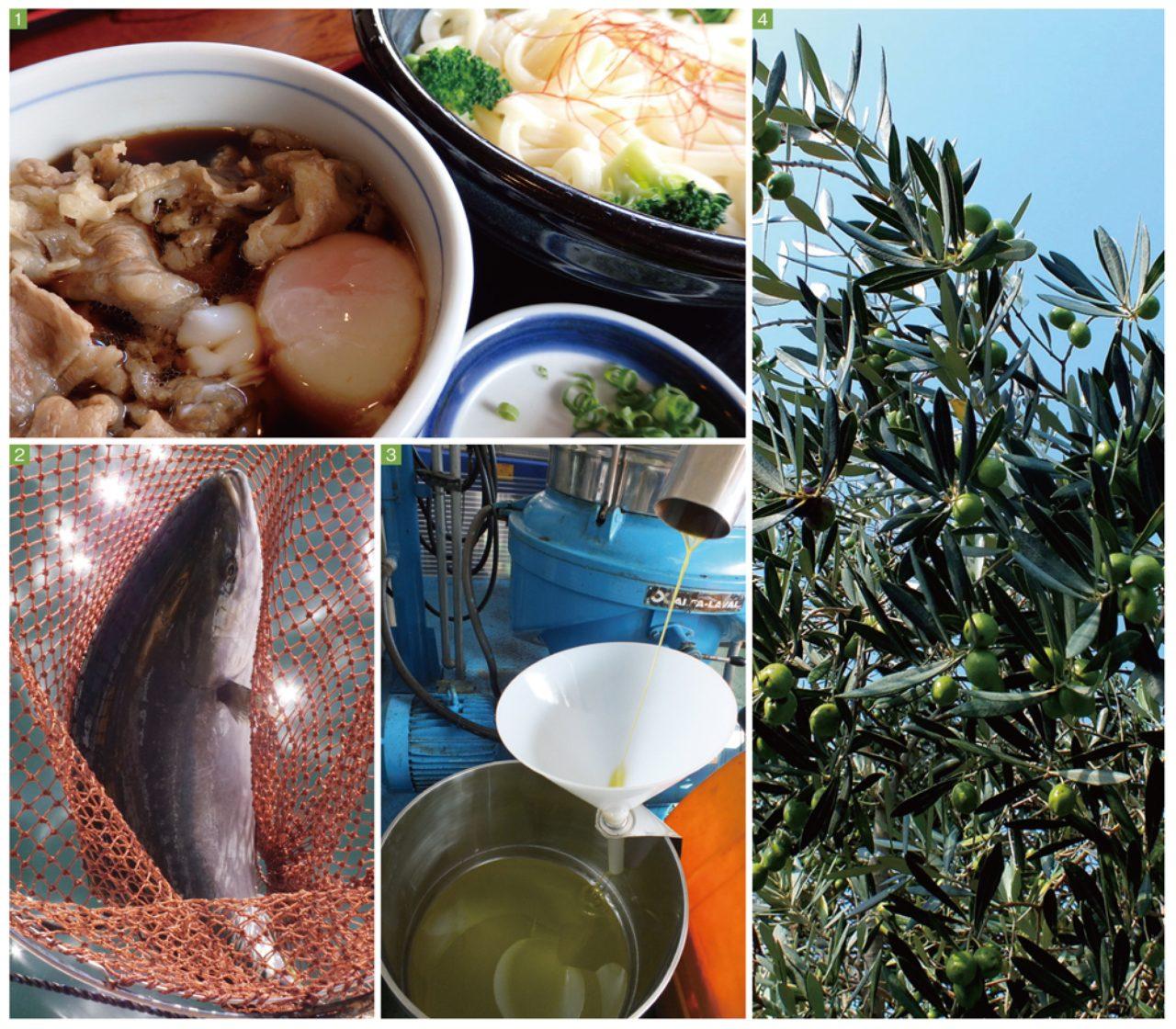 画像: 香川県の「おいしい」はオリーブがキーワードになっている。 1.人気うどん店「本格手打 もり家」ではオリーブ牛肉うどんが大人気に  2.最盛期を迎えたオリーブはまち  3.大切に栽培・採油されるオリーブオイル  4.細い枝にずっしりと実ったオリーブが風に揺れる。小豆島の実りの季節を象徴する風景だ