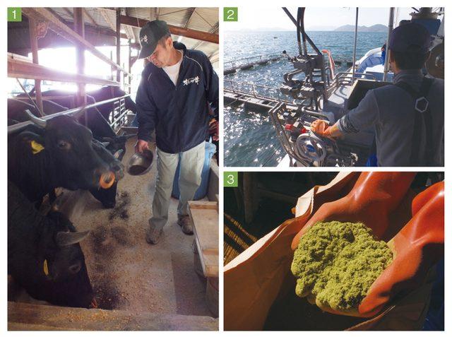 画像: 1.オリーブ飼料に牛たちが群がる  2.島野養魚のいけす。飼料が投げ入れられるとハマチが急速で旋回  3.粉末飼料は、にが〜い、でもうまい?