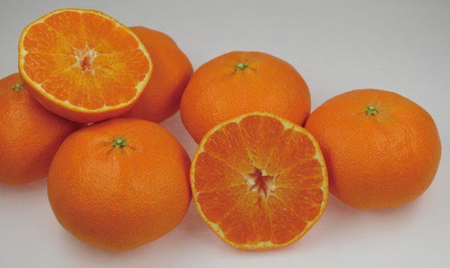 画像: 愛媛生まれの超高級柑橘ブランドが誕生