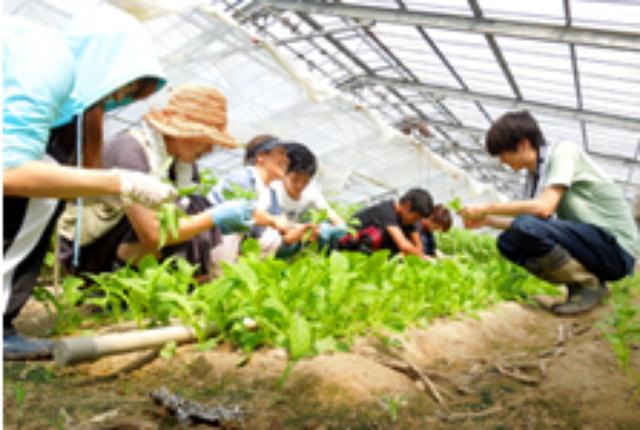 画像: 農業体験の様子 koukokujyuku.org