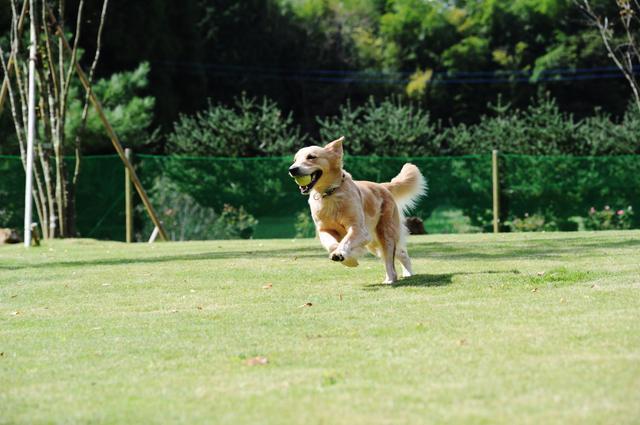 画像1: すべてが愛犬のためのリゾート 『小谷流の里 ドギーズアイランド』