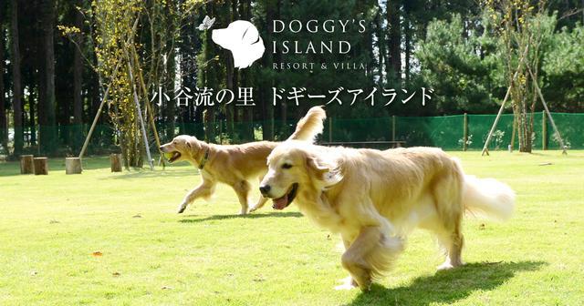 画像: 小谷流の里ドギーズアイランド 千葉の里山で愛犬と楽しむドッグリゾート