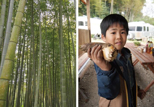 画像: 畑作業を終え、待望のタケノコ堀り! 掘り方のミニレクチャーを受けると竹林に全員が散った。お父さんと参加した男の子は小ぶりのタケノコをゲット!「お父さんのタケノコより僕のほうがおいしい!」と自信たっぷり