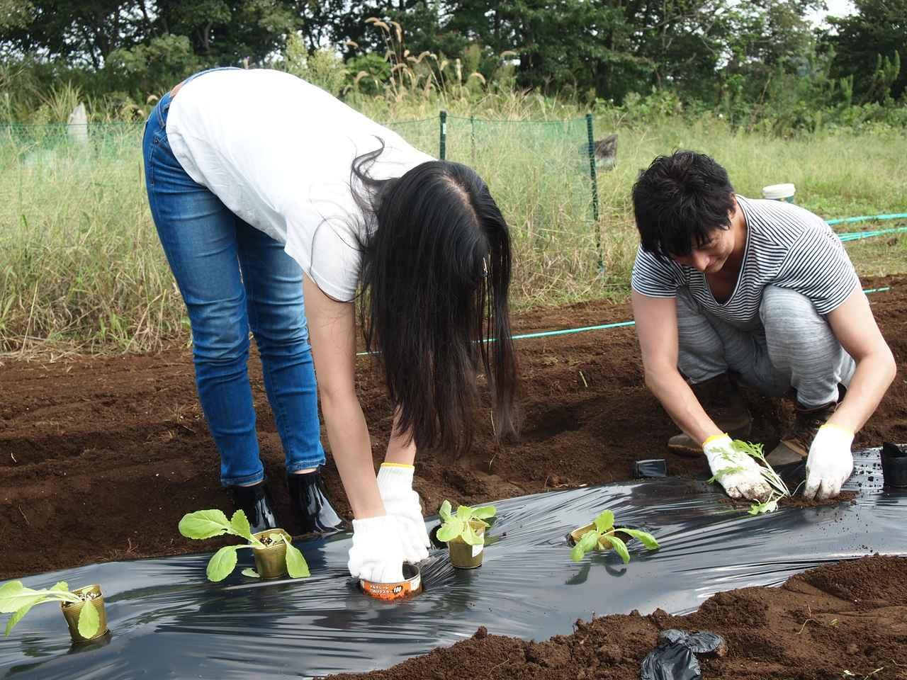 画像: 短期で収穫ができる葉ものを中心に植え付け