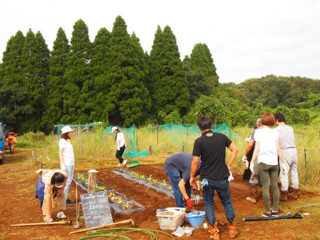 画像2: 絶品鍋はおいしい白菜が作る Farming Garden in リソル生命の森リゾート イベントリポート