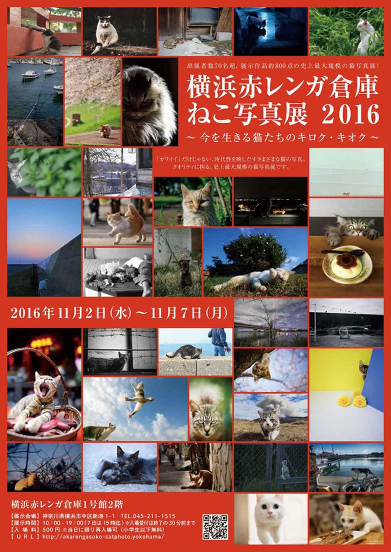 画像: 『横浜赤レンガ倉庫 ねこ写真展 2016  〜今を生きる猫たちのキロク・キオク〜』