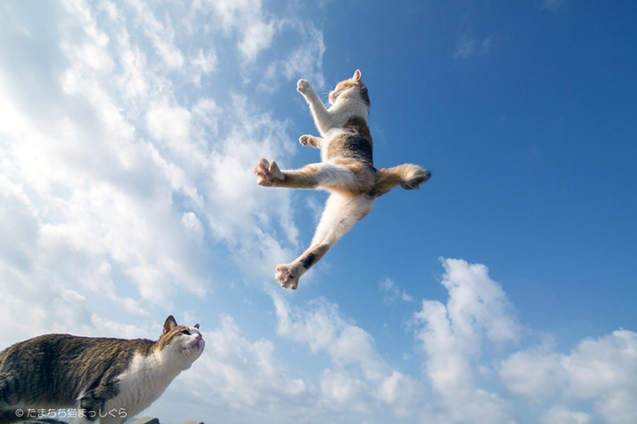 画像2: カワイイだけじゃない! 奥深き猫写真の魅力に迫る。