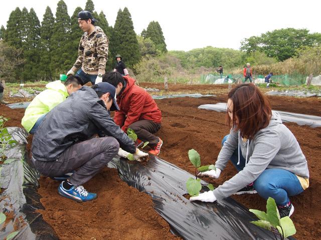 画像1: 夏の畑は大豊作で決定! みんなでジャガイモの芽かき&竹の子狩り Farming Event Report【2016.4.24】