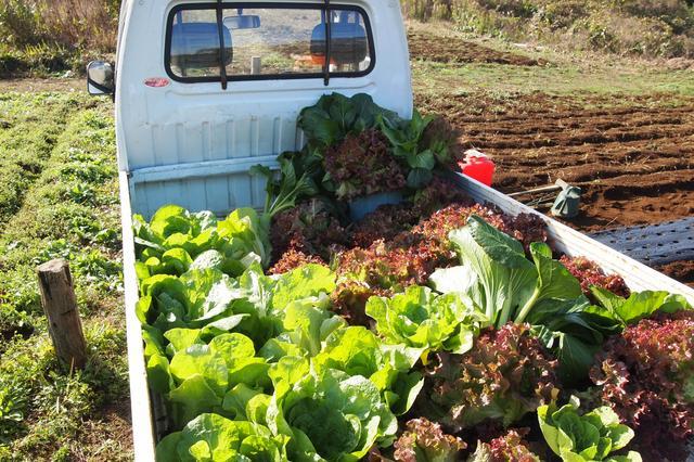 画像1: レタス豊作&クリスマスリースを手作り Farming Event Report【2016.11.29】