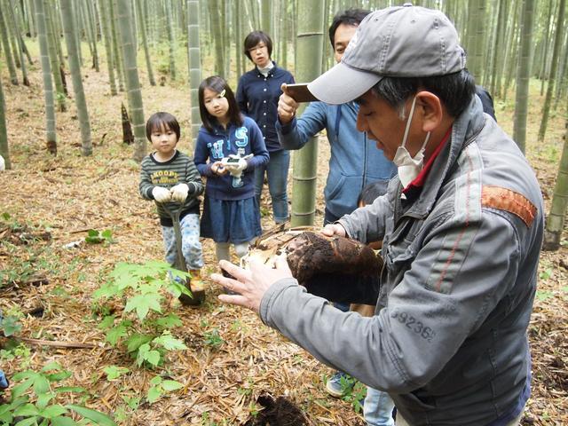 画像4: 夏の畑は大豊作で決定! みんなでジャガイモの芽かき&竹の子狩り Farming Event Report【2016.4.24】