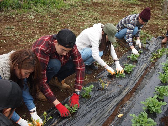 画像2: 夏の畑は大豊作で決定! みんなでジャガイモの芽かき&竹の子狩り Farming Event Report【2016.4.24】