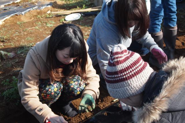 画像2: レタス豊作&クリスマスリースを手作り Farming Event Report【2016.11.29】