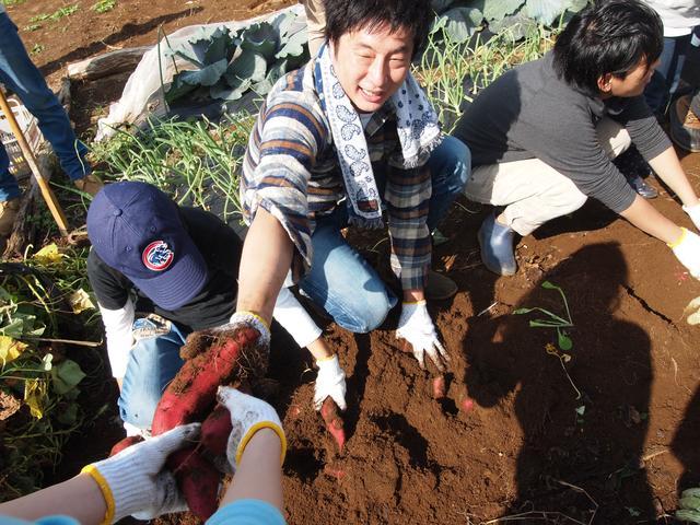 画像1: イモ掘りじゃなくて、イモ拾い? Farming Event Report【2014.10.26】