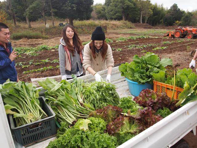 画像1: 軽トラの荷台いっぱいの葉物にビックリ!? Farming Event Report【2014.11.30】