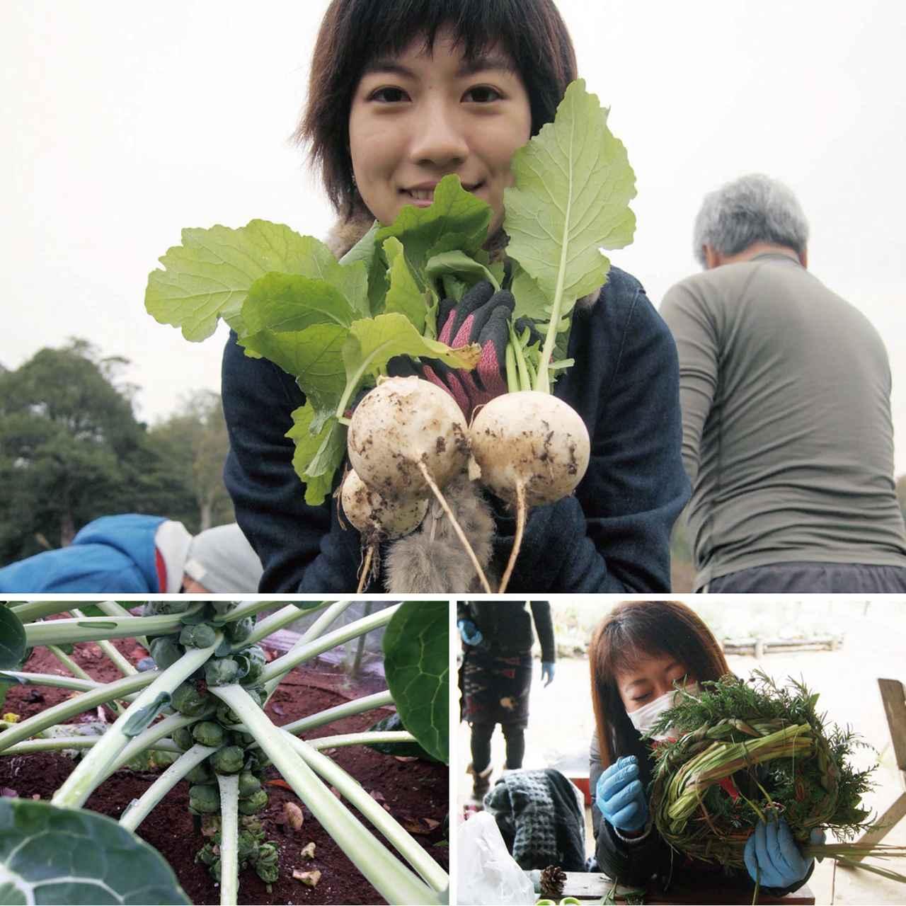 画像1: かぶやレタス、春菊をどっさり収穫! 高値の野菜、取れたてでいただきます Farming Event Report【2016.11.27】