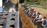 画像1: 「種だんご」作戦で大豊作を狙え! Farming Event Report【2017.4.23】