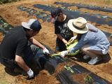 画像1: もはや職人技!? 手慣れた様子でサツマイモの植え付け完了! Farming Event Report【2017.5.21】