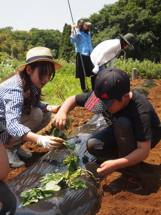 画像2: もはや職人技!? 手慣れた様子でサツマイモの植え付け完了! Farming Event Report【2017.5.21】