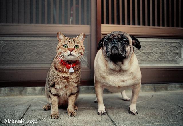 画像: 「来年、干支なんです」「一緒にやるニャ!」ネコとイヌの仲良し写真展、終了間近!/12月28日(木)の東京イベント