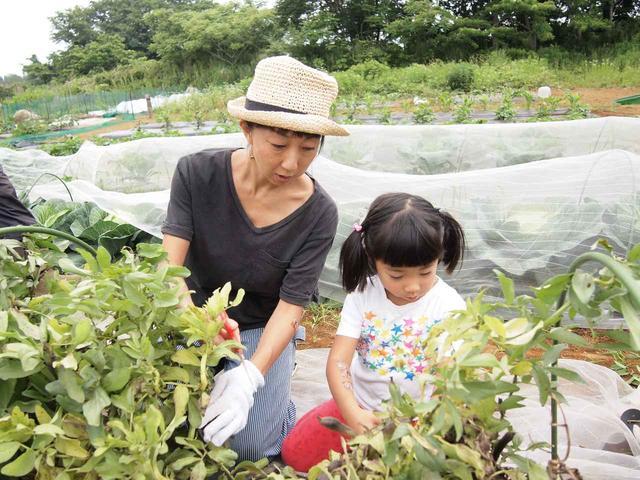 画像3: 春キャベツに空豆の収穫と害獣対策!すでにイノシシの痕跡が…【2018.5.27】