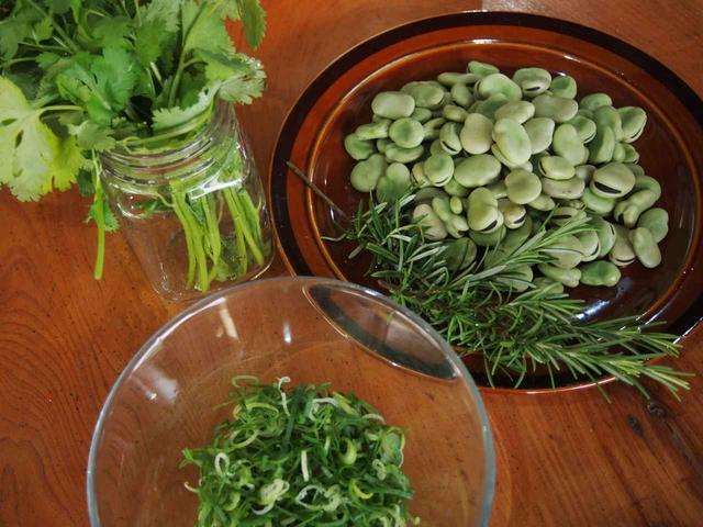画像4: 春キャベツに空豆の収穫と害獣対策!すでにイノシシの痕跡が…【2018.5.27】