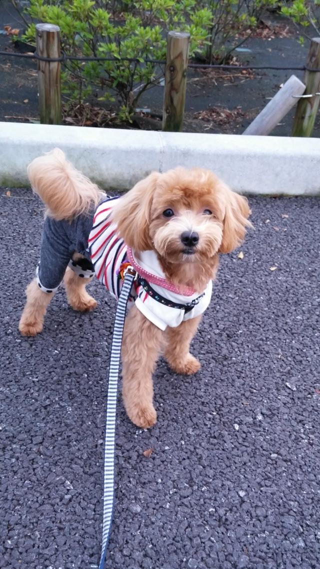 画像: 【ひめくりワンダホー】クッキーくん(3歳7カ月)