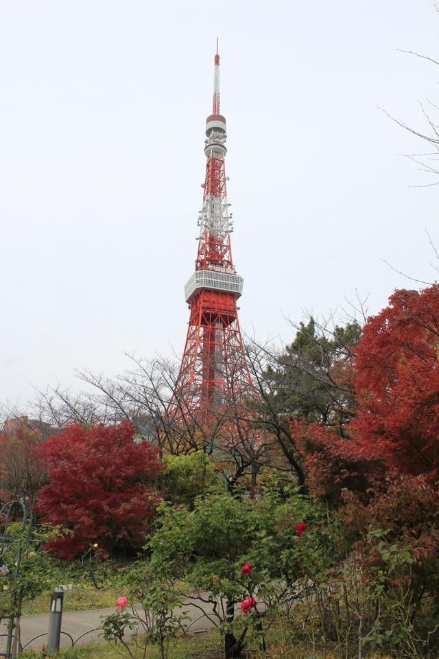 画像: 東京タワーアテンダントチームの東京タワー通信!「紅葉と東京タワー」【2018.11.20】