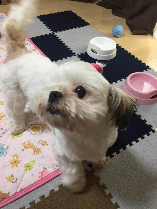画像: 【ひめくりワンダホー】コロちゃん(6歳0カ月)