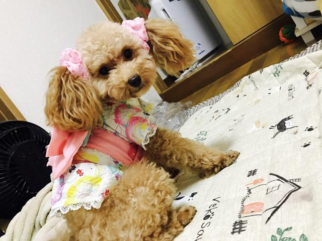 画像: 【ひめくりワンダホー】らんちゃん(2歳2カ月)