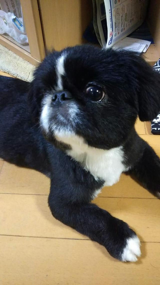 画像: 【ひめくりワンダホー】一風茶ちゃん(1歳5カ月)