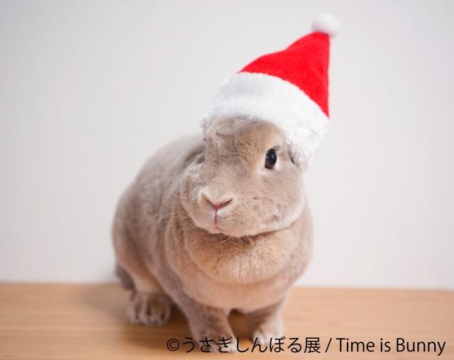 画像: ウサギでモフモフのクリスマス! /12月18日(火)の東京イベント